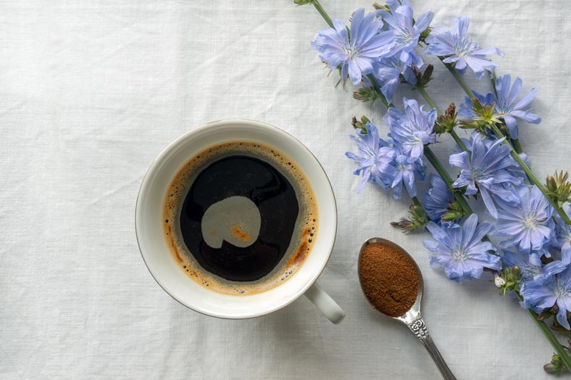 Preparare il caffè di cicoria